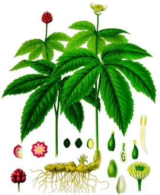 Herbal Remedies - Goldenseal