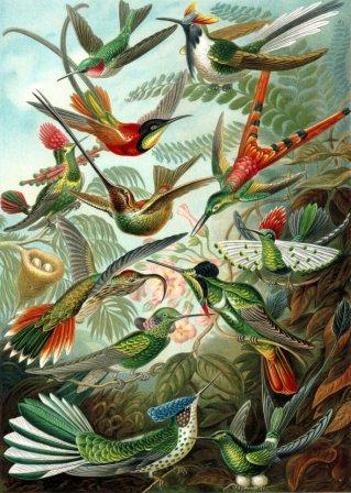 Hummingbirds Picture