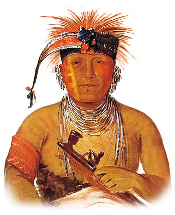 Picture of a Otoe