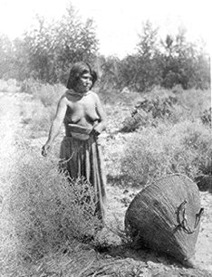 Paiute Woman gathering seeds