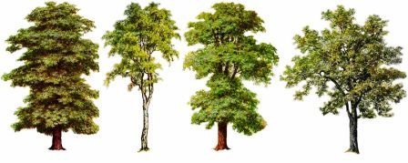 Meaning of trees What is the meaning of tree